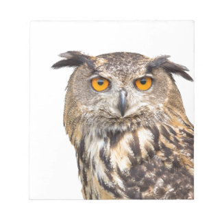 Portrait of eagle owl on white notepad