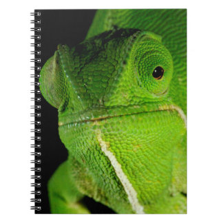 Portrait Of Flap-Necked Chameleon Notebook