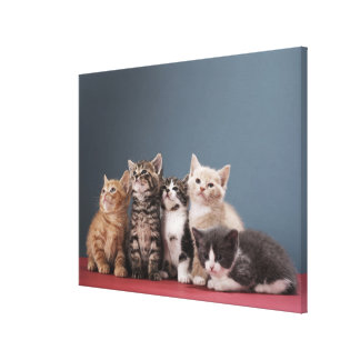 Portrait of group of kittens canvas print