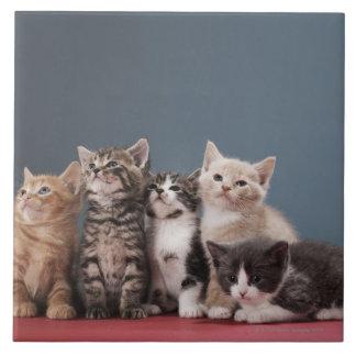 Portrait of group of kittens tile