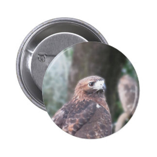 Portrait of hawk over a nature blurred background 6 cm round badge