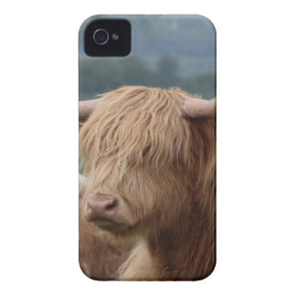 portrait of Highland Cattle iPhone 4 Cover