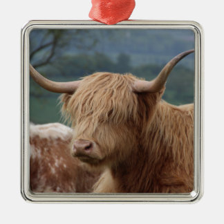 portrait of Highland Cattle Metal Ornament