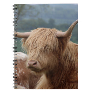 portrait of Highland Cattle Notebook