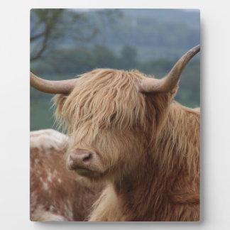portrait of Highland Cattle Plaque