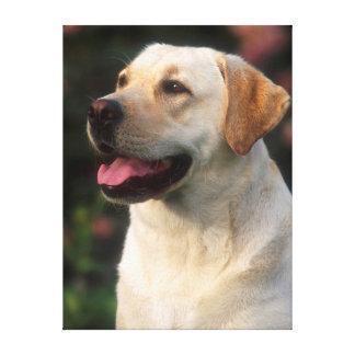 Portrait Of Labrador Retriever, Hilton Gallery Wrap Canvas
