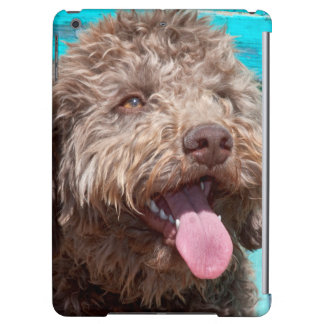 Portrait Of Lagotto Romagnolo In Front Of Blue