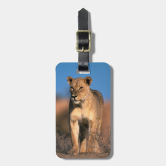 Portrait Of Lioness (Panthera Leo) Bag Tags