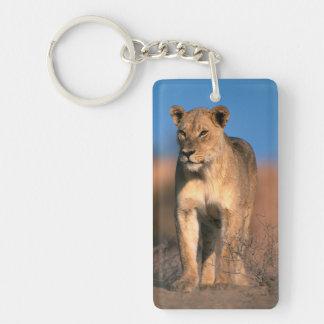 Portrait Of Lioness (Panthera Leo) Double-Sided Rectangular Acrylic Key Ring