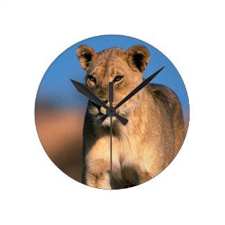 Portrait Of Lioness (Panthera Leo) Wallclocks