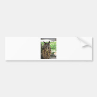 Portrait of long-eared owl . Asio otus, Strigidae Bumper Sticker