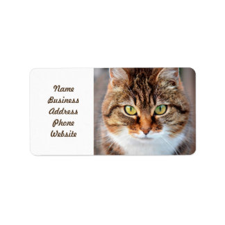 Portrait of Manx Cat Green-Eyed Address Label