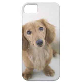 Portrait of Miniature Dachshund sitting, high Barely There iPhone 5 Case