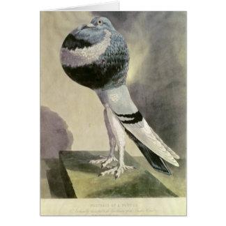 Portrait of Pouter Pigeon Card