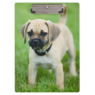 Portrait of puppy standing in grass clipboard