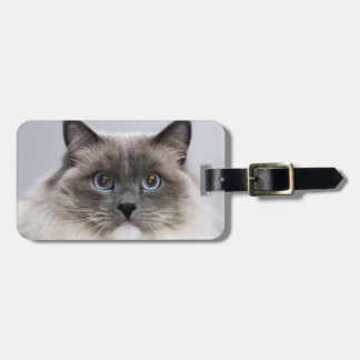 Portrait of Ragdoll cat Luggage Tag