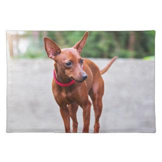 Portrait of red miniature pinscher dog placemat