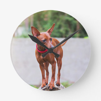 Portrait of red miniature pinscher dog round clock