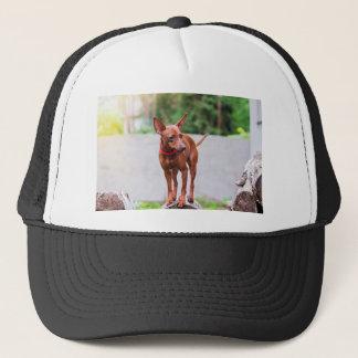 Portrait of red miniature pinscher dog trucker hat