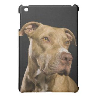 Portrait of red nose pitbull with black iPad mini case