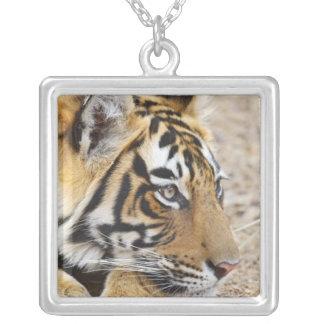 Portrait of Royal Bengal Tiger, Ranthambhor 3 Square Pendant Necklace