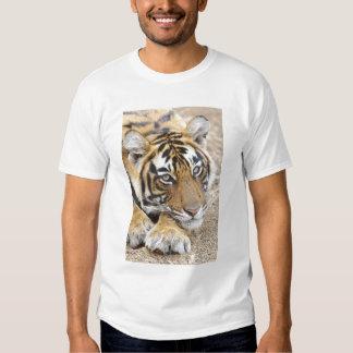Portrait of Royal Bengal Tiger, Ranthambhor 4 Shirts