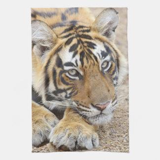 Portrait of Royal Bengal Tiger, Ranthambhor 4 Tea Towel