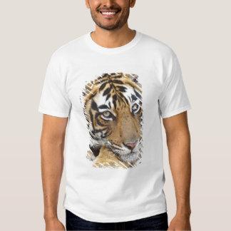 Portrait of Royal Bengal Tiger, Ranthambhor 4 Tee Shirts