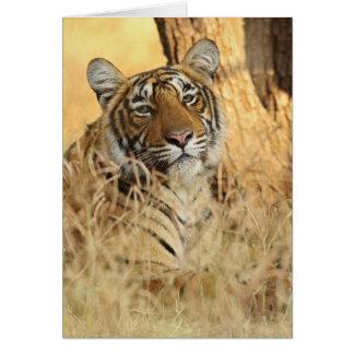 Portrait of Royal Bengal Tiger, Ranthambhor Greeting Card