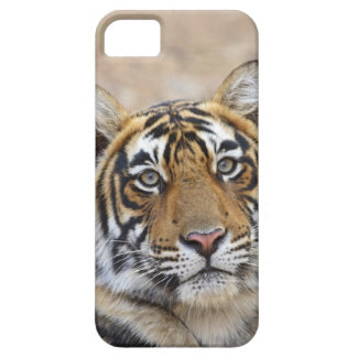 Portrait of Royal Bengal Tiger, Ranthambhor iPhone 5 Cover