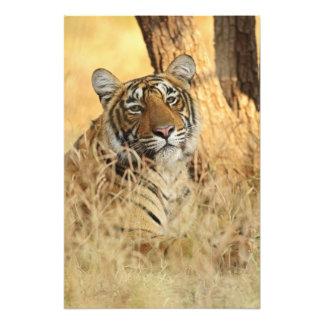 Portrait of Royal Bengal Tiger, Ranthambhor Photographic Print