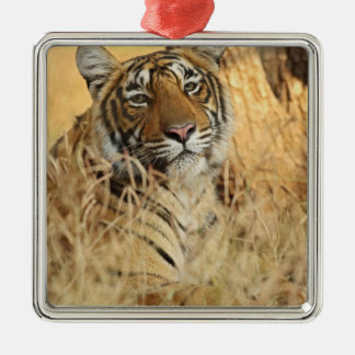 Portrait of Royal Bengal Tiger, Ranthambhor Silver-Colored Square Decoration