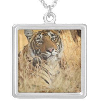 Portrait of Royal Bengal Tiger, Ranthambhor Square Pendant Necklace