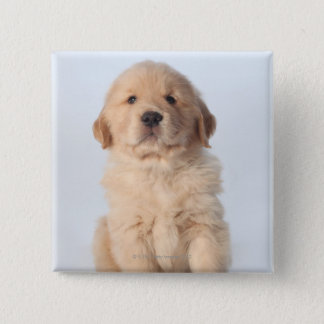 Portrait of six week old golden retriever puppy. 15 cm square badge