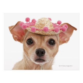 Portrait of small dog in sombrero postcard