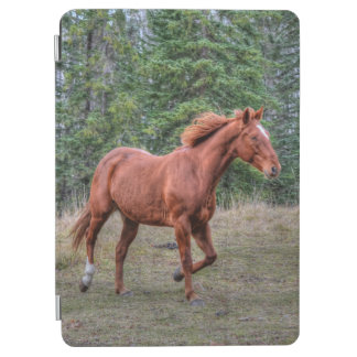 Portrait of Sorrel Mare Equine Horse Photo 2 iPad Air Cover