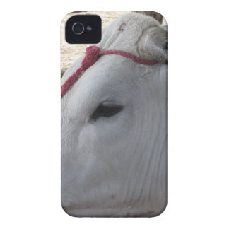 Portrait of the Chianina, italian breed of cattle Case-Mate iPhone 4 Cases