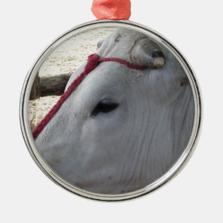 Portrait of the Chianina, italian breed of cattle Metal Ornament