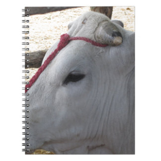 Portrait of the Chianina, italian breed of cattle Notebooks