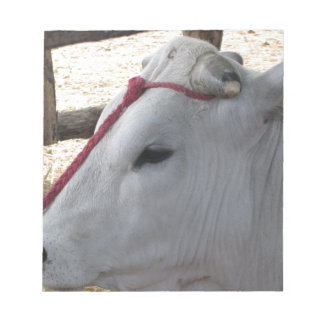 Portrait of the Chianina, italian breed of cattle Notepad