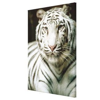 Portrait of tiger canvas print