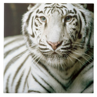 Portrait of tiger tile
