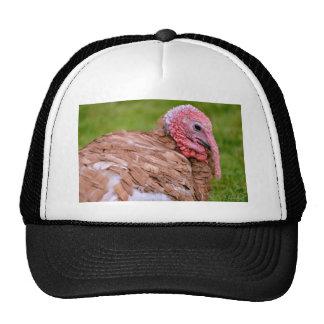 Portrait of turkey trucker hats
