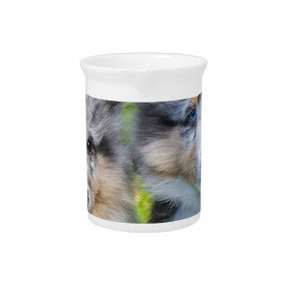 Portrait of two young sheltie dogs drink pitchers