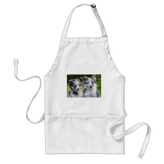 Portrait of two young sheltie dogs standard apron