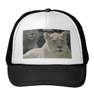 Portrait of white lioness mesh hat