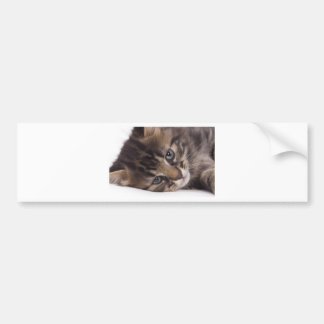portrait off tabby kitten bumper sticker
