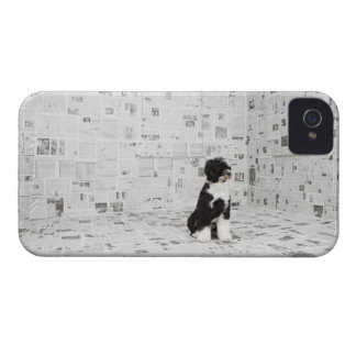 Portuguese Water Dog in room covered in iPhone 4 Case-Mate Cases