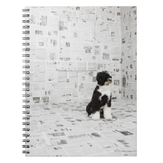 Portuguese Water Dog in room covered in Notebooks