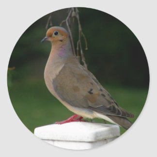 Posed Mourning Dove Round Sticker